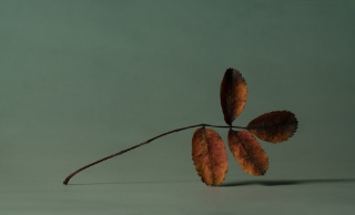 twig leaves 12x6|38x23@2024x1230